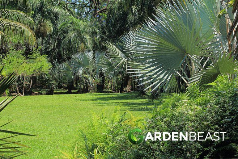 Garden Palm Trees