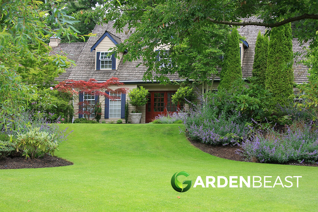 10 Best Landscaping Shrubs For Your Yard Complete Guide
