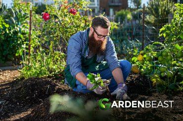 Millenials Gardening