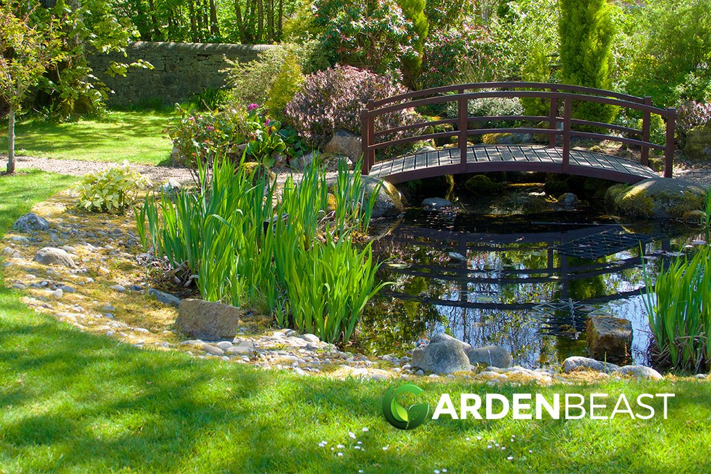 13 Best Backyard Pond Plants Complete Guide