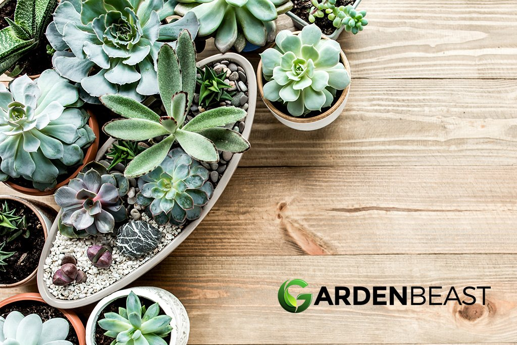 Complete Guide To Succulents How To Plant Care For Succulent Plants