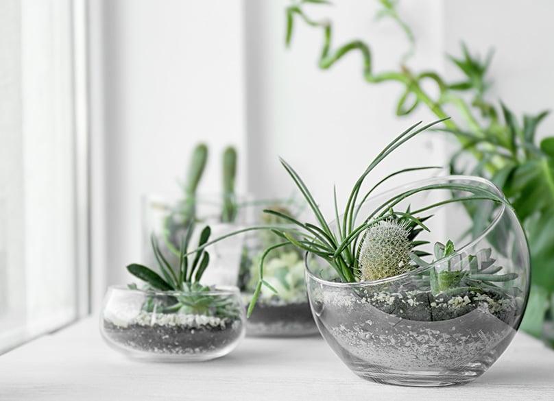 Succulents in a Terrarium