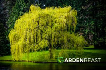 Best Trees for Your Yard