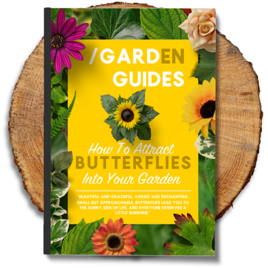 Butterflies eBook