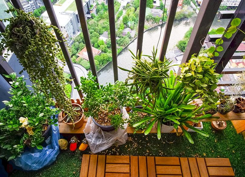 Choose suitable plants