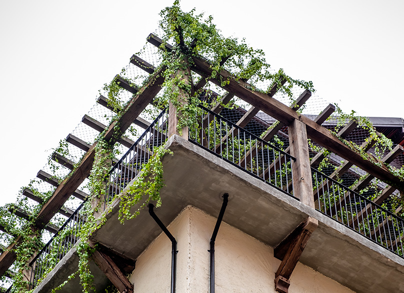 Add a Trellis for climbing plants
