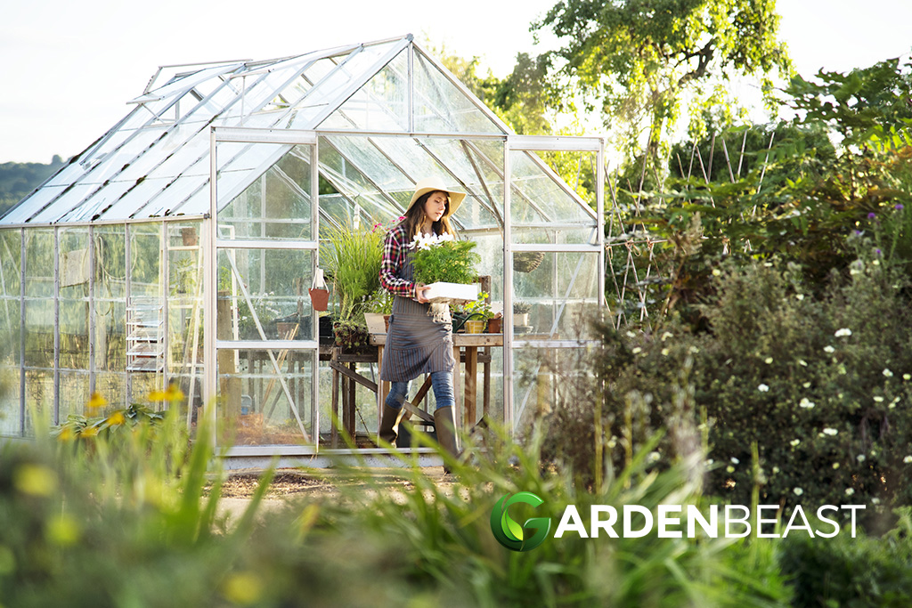 Best Greenhouse Kits