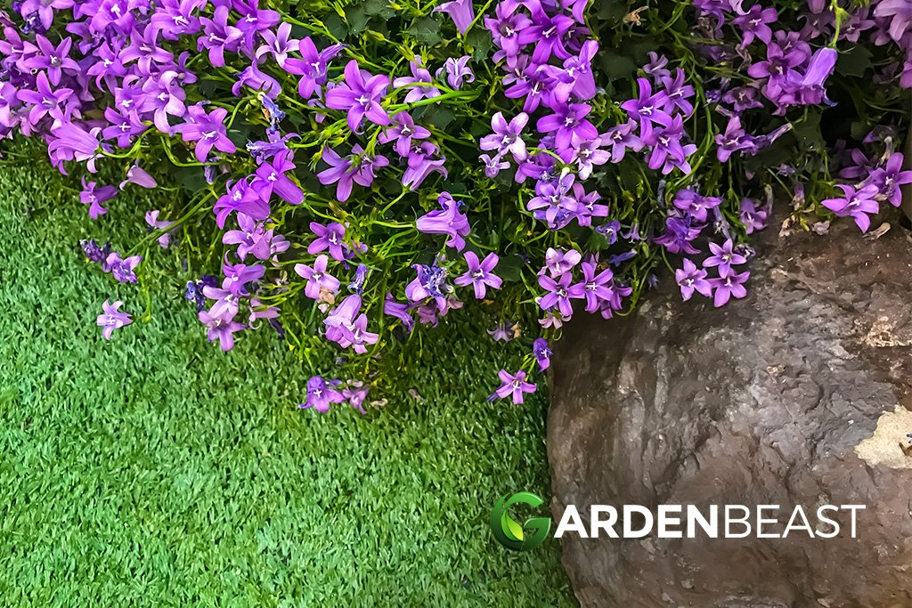 Guide To Creeping Thyme How To Plant Care For Mother Of Thyme