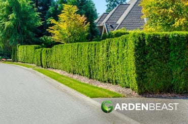 Fast Growing Hedges for Privacy