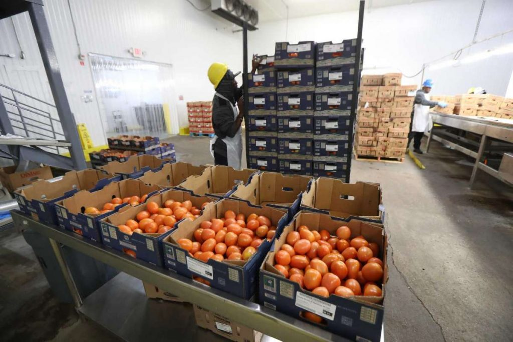 Fruits and vegetables are sorted in the Houston Cold Storage Friday, Jan. 24, 2020, in Houston.