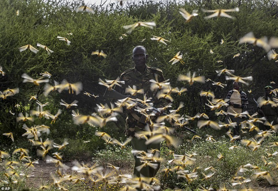 The swarm of locusts, which is estimated to number some 360 billion