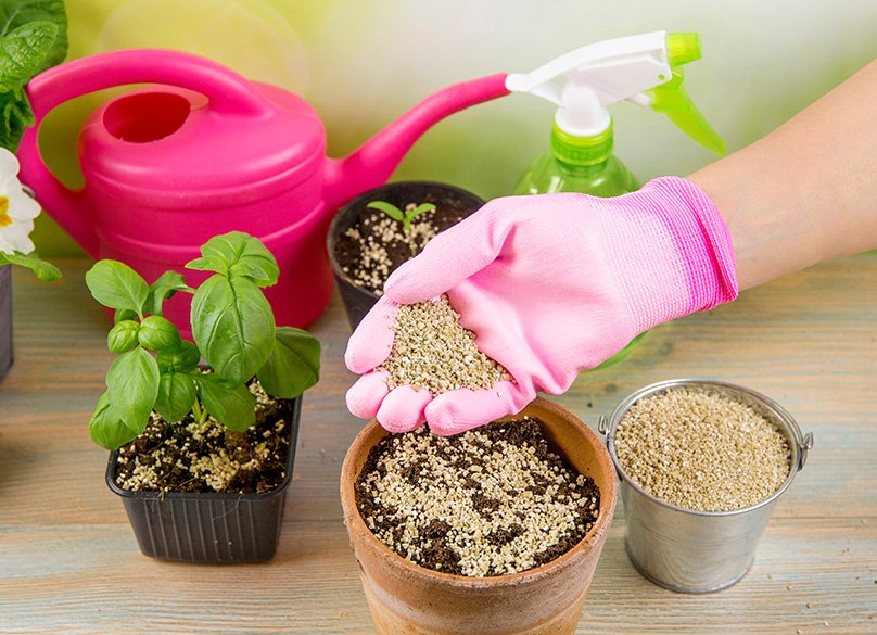 Planting with Vermiculite