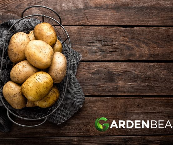 New Study Links Potatoes To Increased Blood Regulation