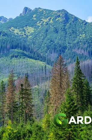 Bark Beetle Infestation Could Spell Doom for Plants in Colorado