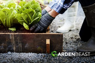 How to Start a Vegetable Garden