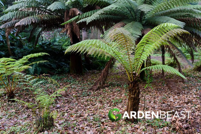 Tree Ferns Guide