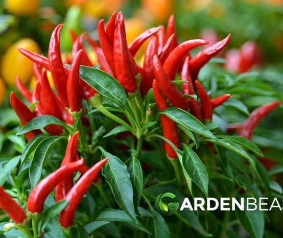 How to Plant & Grow Chilli Peppers: Complete Guide