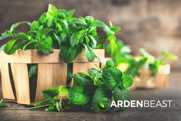 How to Plant & Grow Mint Plants: Complete Guide