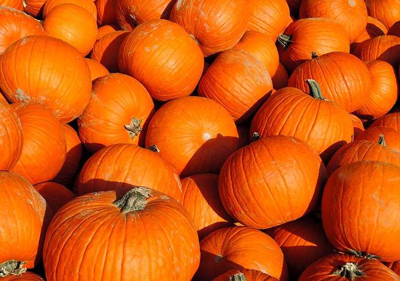 Pumpkins are an American favorite