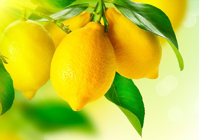 Lemons ripe for harvesting