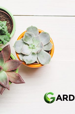 Where to Buy Succulents Online: Top Succulent Stores