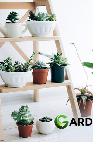 Our 30 Best Indoor Plants: Easy to Care for House Plants Guide