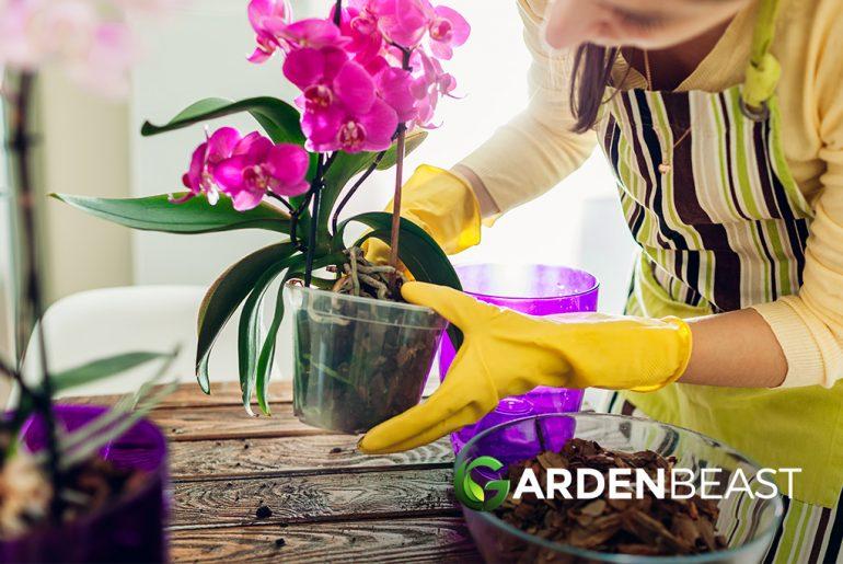 Best Orchid Pots