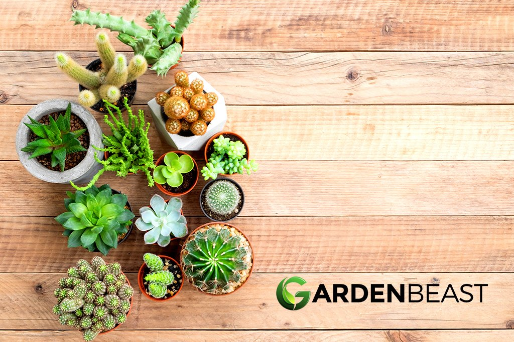 Top 10 Rare Unusual Looking Succulents Cacti Complete Guide