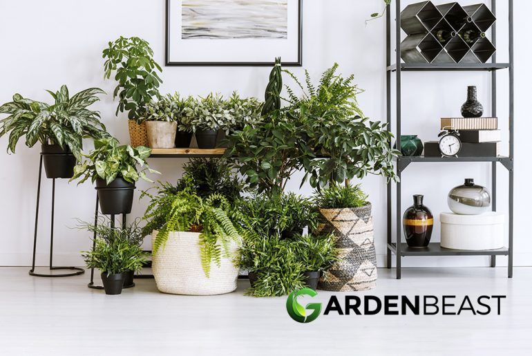 Best Indoor Plant Stand