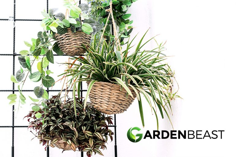 Best Hanging Plant Stand