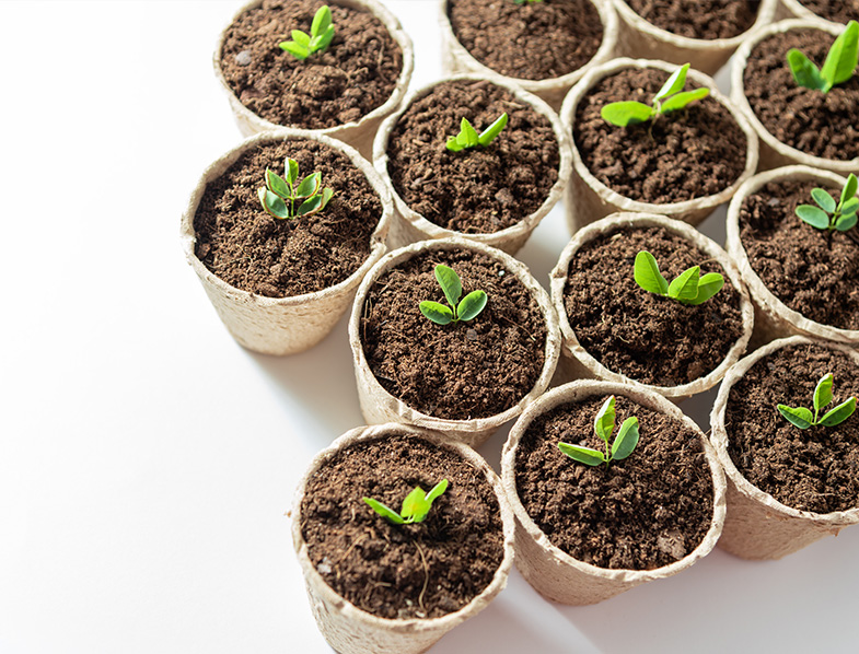 Growing in pots made from Coconut Coir