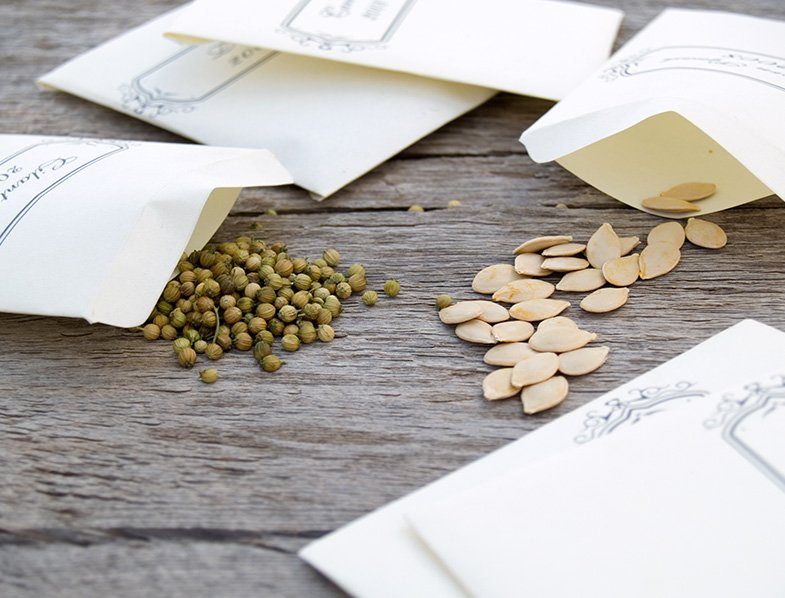 Pack your air-dried seeds in envelopes