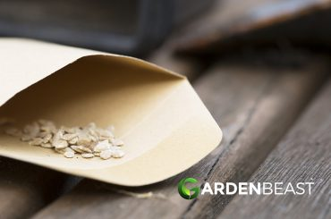 How to Store Seeds
