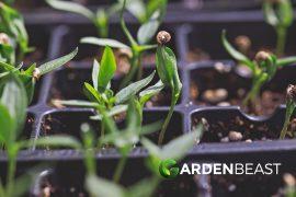 seed starter kit